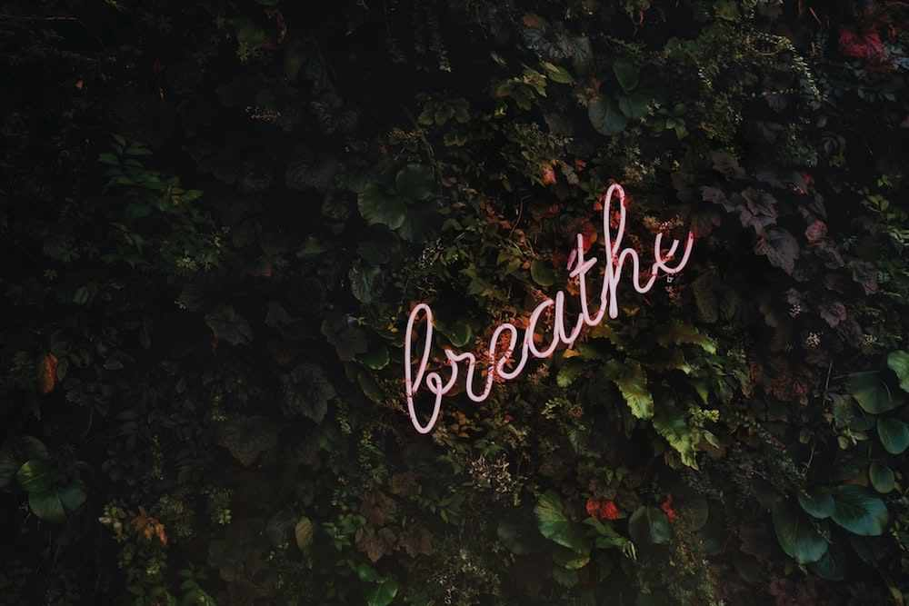 neon pink breath sign amongst green shrubbery on wall