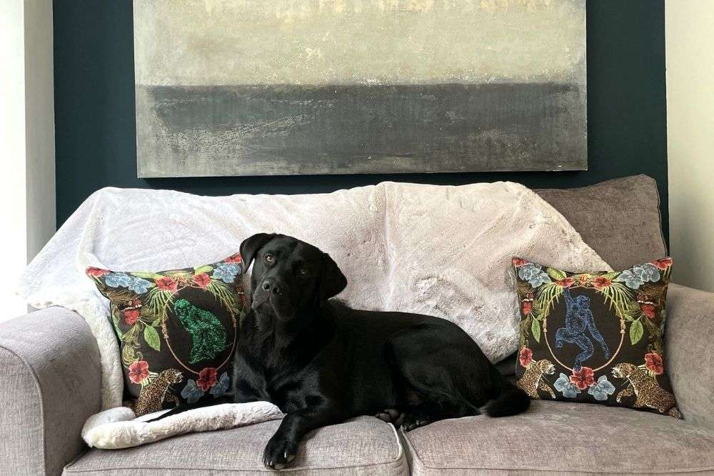 Dog on sofa with art on the wall