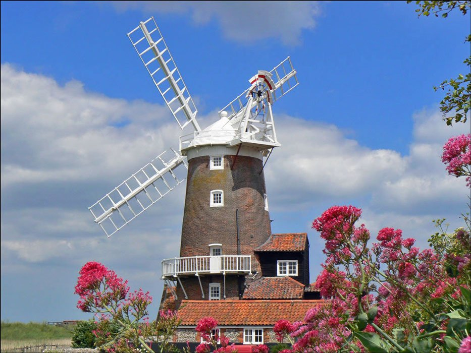 cley-flowers